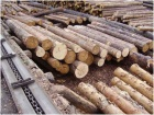 "In Golyshmanovo area was opened wood processing plant ""RASHFOR"""
