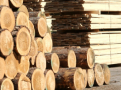 A large timber processing complex will be build in the Tyumen region
